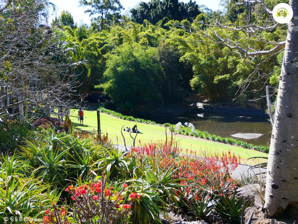 Exploring Mt Coo-tha - Botanic Gardens