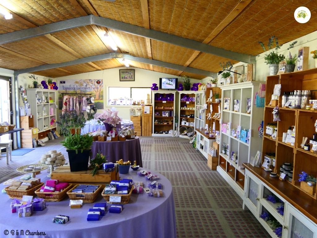 Exploring the Barossa Valley - Lyndoch Lavender Farm and Gift Shop