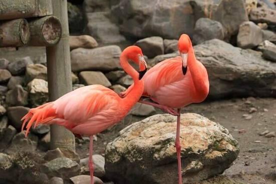 動物園にいるフラミンゴ