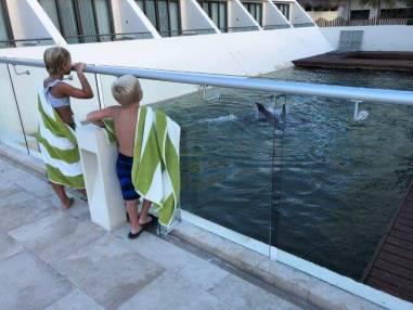 ハイアット・ジーヴァホテルでイルカをみている子供