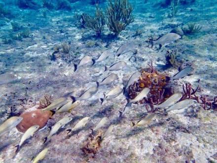 コスメル島でシュノーケリング(魚)2