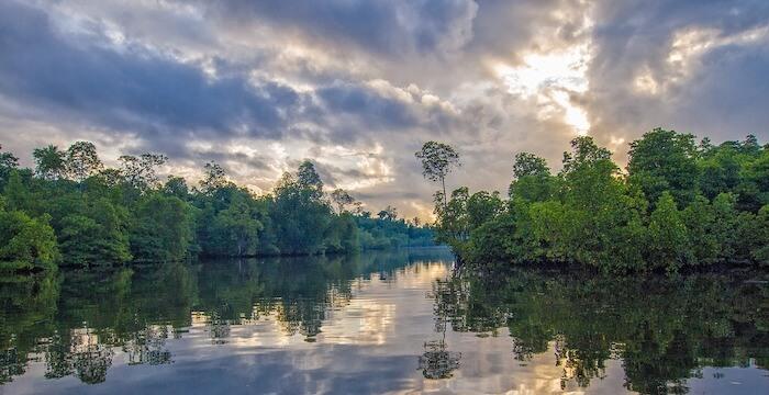 マングローブと河川