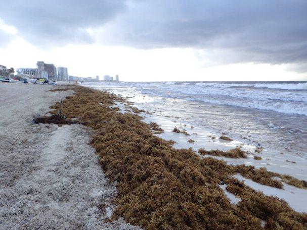海藻まみれのカンクンのビーチ9
