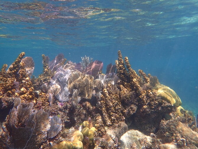 カンクンの海底美術館ツアー17