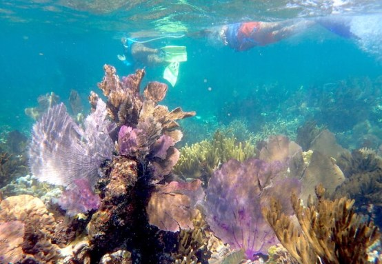 カンクンの美しいサンゴ礁2