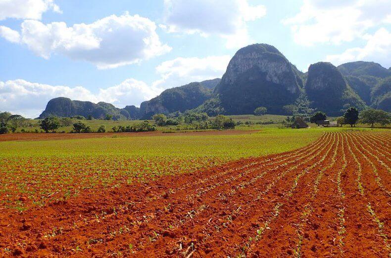 ビニャーレスのタバコ畑と岩山