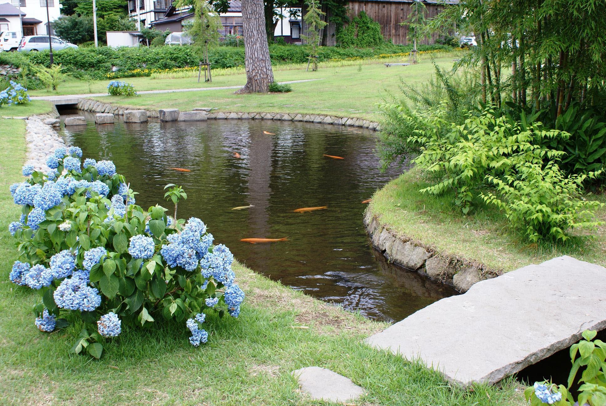 Fish Pond In Garden | Backyard Design Ideas on Backyard Koi Pond Designs  id=77368