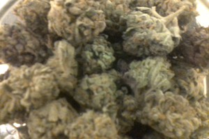 Buy Purple Mayhem Marijuana Online