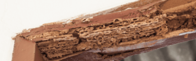 Termite treatment cairns
