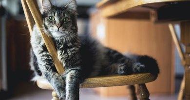 What Vaccines Do Indoor Cats Need?