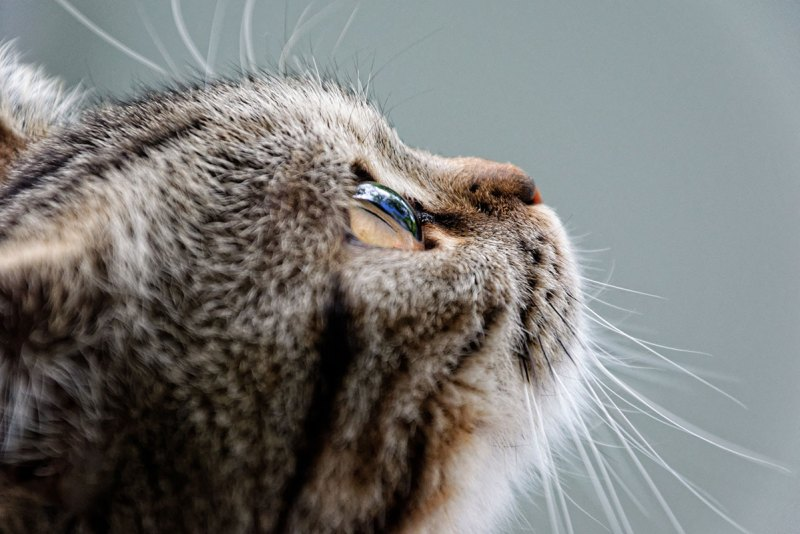What Should I Consider When Looking For A Pet Cat?