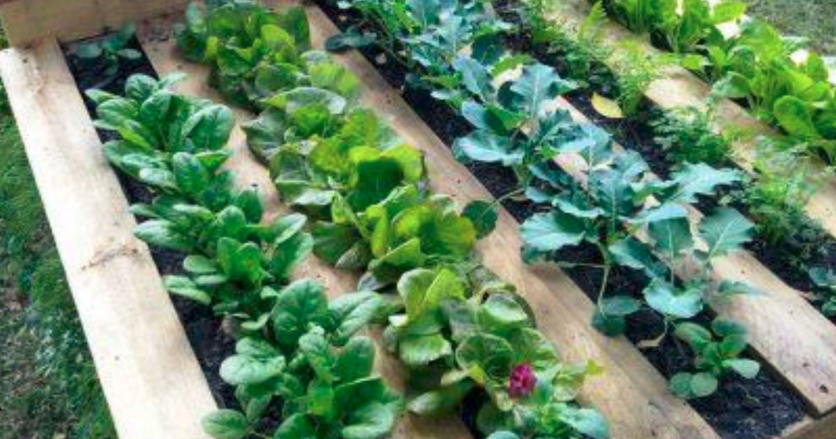 DIY Pallet Garden Instructions Will Deliver A Raised Bed