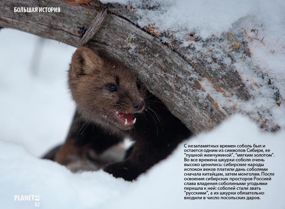 Соболиная охота. В Якутию с National Geographic  и фотографом Андреем Каменевым