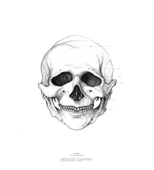 Исторические личности и их черепа. Анатомичские портреты Иствана Ласзло