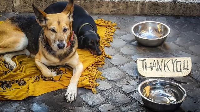 dog, beg, beggar