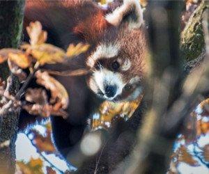 Eintritte für den Zoo Zürich, das Technorama Winterthur, den Skills Park und mehr gewinnen