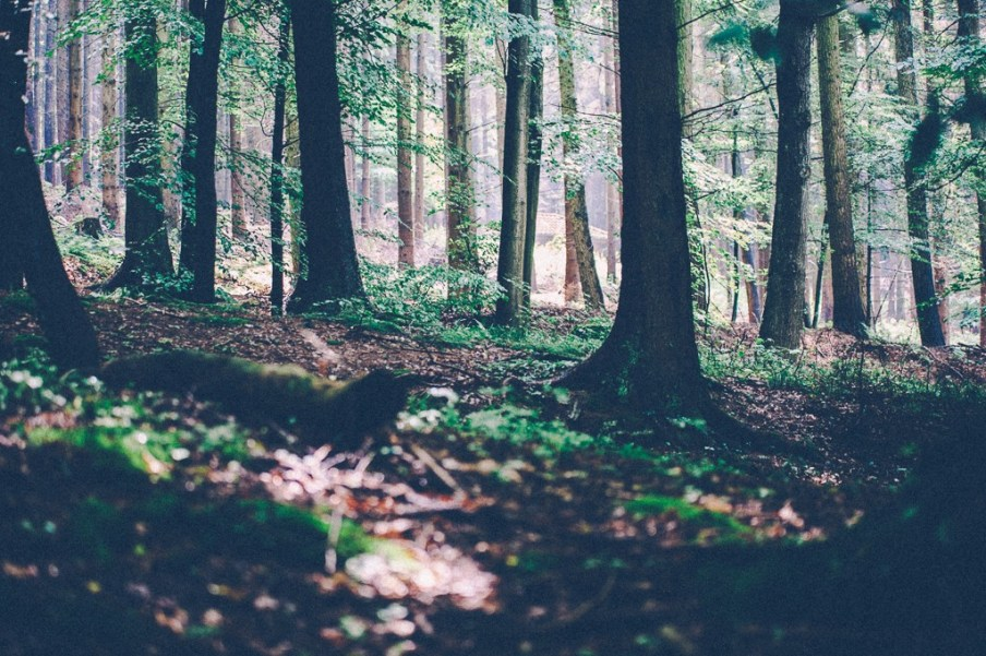 Wo ich bin - Wald im Weserbergland