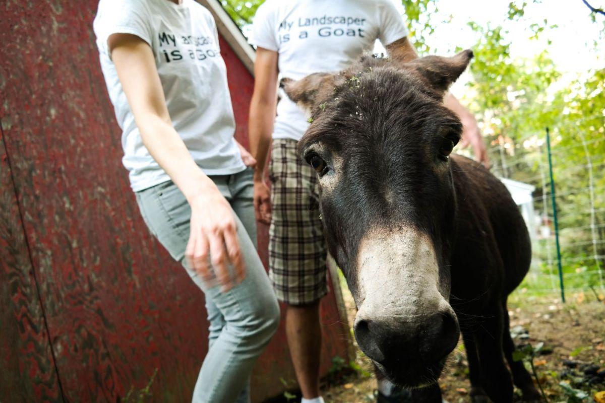 Hobo the donkey. Photo: Lou Blouin