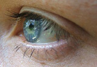 320px-Eye_macro