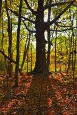 big tree_oct 18