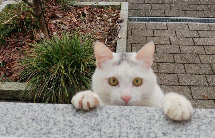 chat bord d'une fenêtre