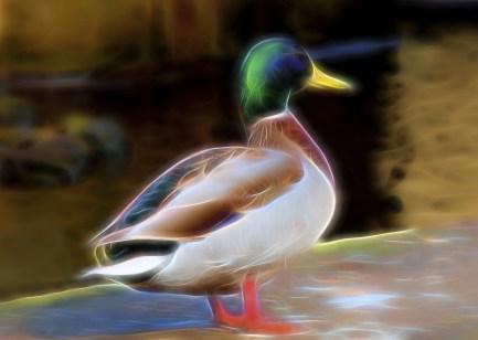 neon-duck
