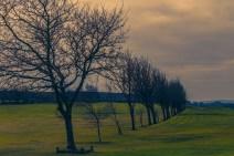 norland-golf-course-dawn