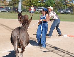 Donkey Ball