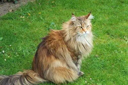 Gibt Es Katzen Für Allergiker Allergiefreie Katzenrassen