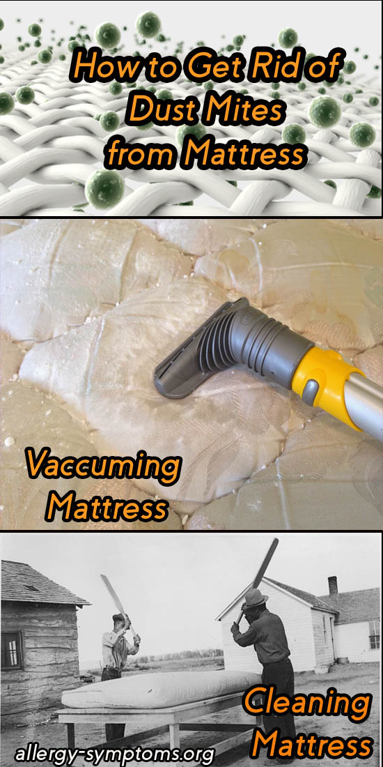 how to get rid of dust mites from mattress