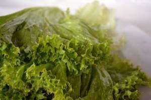lettuce allergy