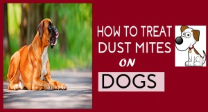 How to Treat Dust Mites on Dogs FB