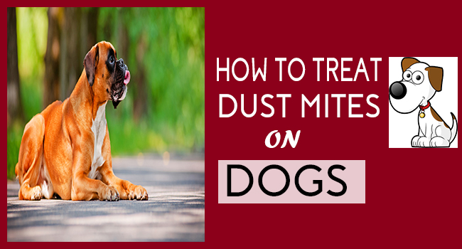 How To Treat Dust Mites On Dogs Allergy Symptoms Org