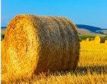 avoid pollen to reduce hayfever