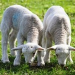 wool makes naturally allergy-resistant bedding