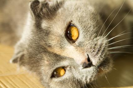 Demenz bei Katzen – eine kognitive Dysfunktion