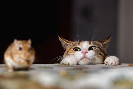 Das Jagdverhalten einer Katze