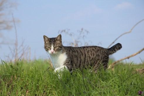 Freilaufende Katze auf einer Wiese