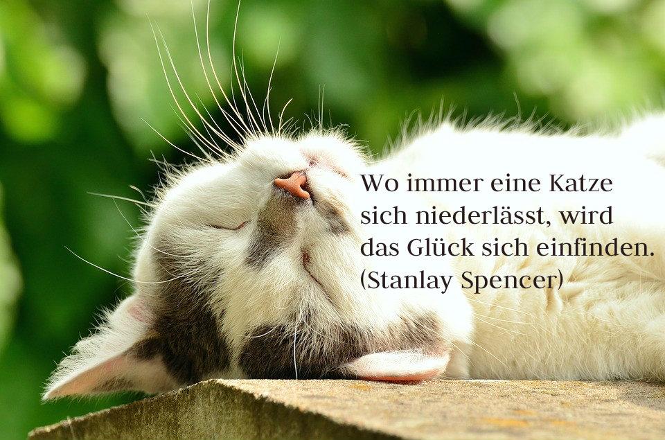 Katzensprüche Bildergalerie: Teilen & versenden!