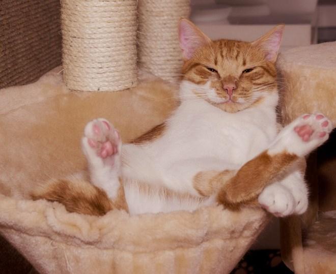 Tierpension für Katzen