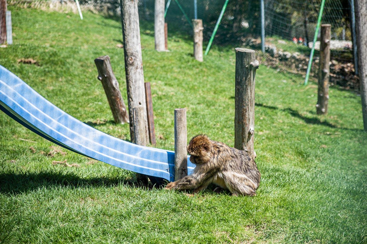 Tierpark Berwang Reutte
