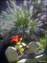 Gräserfeuerwerk