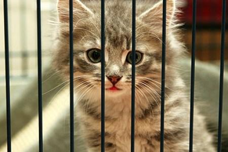 Beste Interieur Ontwerp » kitten klimt in gordijnen   Interieur Ontwerp
