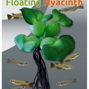 Easy Plants Floating Hyacinth