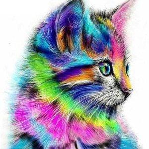 Premium Paintings - Diamond Painting voor volwassenen en Kinderen - Gemaakt van gerecycled plastic - Kat - Katten - Dieren - 20x20 cm