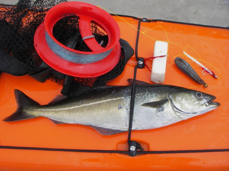 Pollock on deck of kayak, with a spool of fishing line.