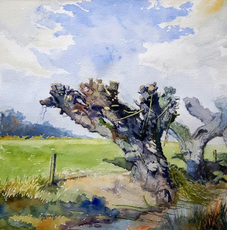 Watercolour, Pollard Willow in the Dutch flood plain of the River Rhine.