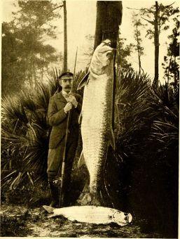Tarpon Fishing Tips