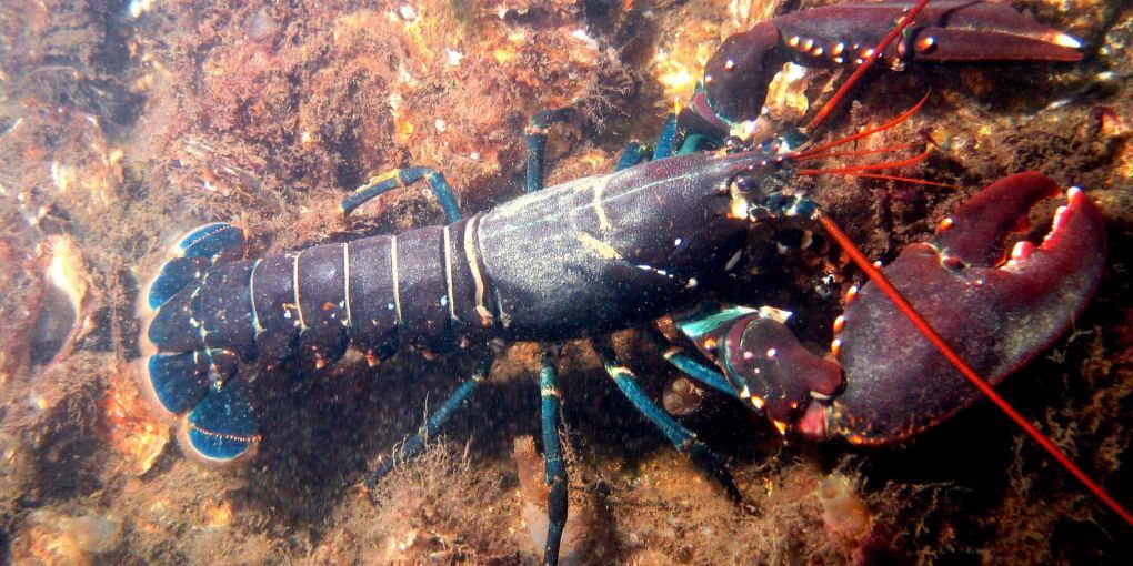 Best Lobster Gloves