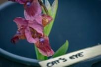 'Cat's eye' 2014